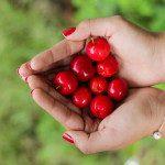 Apadrina un cerezo