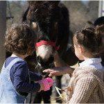 La sierra de Madrid con burros (grupos privados)