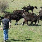 Un día en la granja (grupos privados)