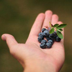 Recoge arándanos y frutos rojos en Riaza